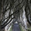 The Dark Hedges — Stockfoto