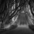 The Dark Hedges — Stock Photo