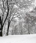 Snow on the trees — Stock Photo