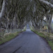 Stock Photo: Dark Hedges