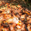 Autumn cleaning fallen leaves. — Stock Photo