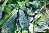 Green autumn foliage — Stock Photo