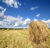 Amazing golden hay bales — Stock Photo