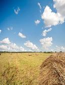 Amazing golden hay bales — Stock Photo