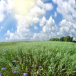 Green field and sun sky — Stock Photo #27026673