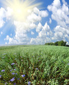 Green field and sun sky — Foto Stock