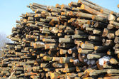 Background of firewood stacked — Stock Photo