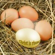 Stock Photo: Nest with chicken eggs
