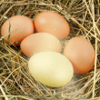 Nest with chicken eggs — Stock Photo