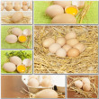 Collage of fresh chicken eggs — Stock Photo