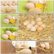 Stock Photo: Collage of fresh chicken eggs