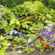 Fragment garden with an artificial pond — Stock Photo #47661077