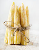 Young small corn — Stock Photo