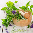 Fresh herbs — Stock Photo #31083047