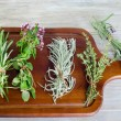 Herbs — Stock Photo #32347531