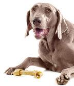 Dog with bone — Stock Photo