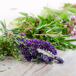 Herbs — Stock Photo #32748523