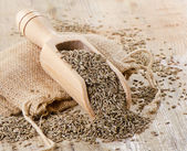 Cumin seeds in wooden scoop — Stock Photo