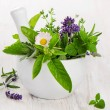 Herbs — Stock Photo #41928493
