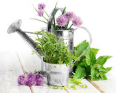 Fresh herbs on a wooden table — Stock Photo