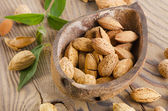 Almonds in coconut shell — Foto de Stock