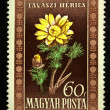 Royalty-Free Stock Photo: HUNGARY - CIRCA 1951: A stamp printed in Hungary shows Adonis vernalis, circa 1951