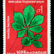 BULGARI- CIRC1970s: stamp printed in Bulgarishows Aesculus hippocastanum, circ1970s — Stock Photo #12160807