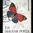 HUNGARY - CIRCA 1984: A stamp printed in Hungary shows butterfly agra sara, circa 1984 - Stock Photo