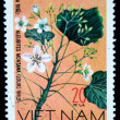 VIETNAM - CIRCA 1978: A stamp printed in Vietnam shows Candlenut - Aleurites Montana, series, circa 1978 — Stock Photo