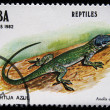 CUBA - CIRCA 1982 :A post stamp printed in Cuba shows lizard reptile, series. Circa 1982 — Stock Photo