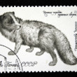 USSR - CIRCA 1980: A stamp printed in USSR shows Arctic fox (Alopex lagopus), series valuable species of fur-bearing animals, circa 1980 — Stock Photo #12160940