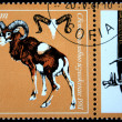 BULGARIA - CIRCA 1981: A stamp printed in Bulgaria shows Argali - Ovis ammon, circa 1981 — Stock Photo