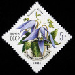 USSR - CIRCA 1981: a stamp printed in the USSR shows mountain flower Atragene alpina, series, circa 1981 — Stock Photo