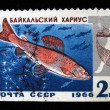 Stock Photo: USSR - CIRC1966: stamp printed in USSR shows Baikal Grayling ore genus, circ1966