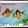 VIETNAM - CIRC1980: stamp printed by Vietnam shows fish Barbus Tetrazona, stamp is from series, circ1980 — Stock Photo #12161048