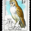 HUNGARY - CIRCA 1984: A stamp printed in Hungary shows Western Barn Owl -Tyto alba, circa 1984 — Stock Photo #12161049