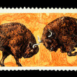 USSR - CIRCA 1969: A stamp printed in the USSR shows European bison - Bison bonasus, circa 1969 - Stock Photo