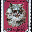 MONGOLIA - CIRCA 1979: A stamp printed in Mongolia shows Blue-Cream Persian cat, series, circa 1979 — Stock Photo