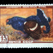 Stock Photo: USSR - CIRC1960s: stamp printed in USSR shows bird Black Grouse or Blackgame - Tetrao tetrix, circ1960s