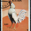 Stock Photo: CUB- CIRC1981: stamp printed in Cubshows Cock Fight Blanco, stamp is from series, circ1981