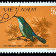 Royalty-Free Stock Photo: VIETNAM - CIRCA 1981: A stamp printed in Vietnam shows the Bird Blue-napped Sunbird - Nectarinia hypogrammica, stamp is from the series, circa 1981