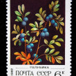 Royalty-Free Stock Photo: USSR - CIRCA 1982: A stamp printed in the USSR shows blueberries, circa 1982. \