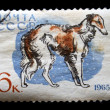 Stock Photo: USSR - CIRC1965: stamp printed in USSR shows borzoi, circ1965