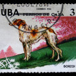 Stock Photo: CUB- CIRC1976: stamp printed in Cubshows borzoi, circ1976