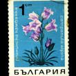 BULGARI- CIRC1970s: stamp printed in Bulgarishows campanulalpina, circ1970s — Stock Photo #12161269