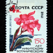 "USSR - CIRCA 1962: A stamp printed in the USSR shows flower Canna lily ""East-2"", circa 1962 — Stok fotoğraf"