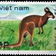 VIETNAM - CIRCA 1982: A stamp printed in Vietnam shows Kangaroo, series, circa 1982 — Stock Photo