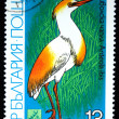 BULGARIA - CIRCA 1981: A stamp printed in Bulgaria shows bird Cattle Egret - Ardeola ibis, circa 1981 — Stock Photo