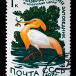 USSR - CIRCA 1976: A stamp printed in the USSR shows bird Cattle Egret - Bubulcus ibis, circa 1976 — Stock Photo
