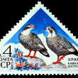 USSR - CIRCA 1973: A stamp printed in the USSR shows bird Caucasian Snowcock - Tetraogallus caucasicus, circa 1973 — Stock Photo